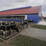 Молочные фермы и комплексы